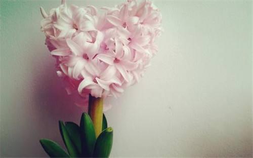 送花祝福语